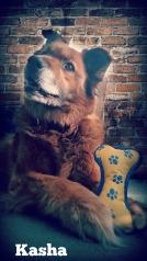 Mary J McCoy-Dressel, western romance, Marketing for Romance Authors Blog hop Post, my dog Kasha