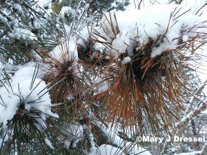 Christmas 2017, Mary J McCoy-Dressel, western romance