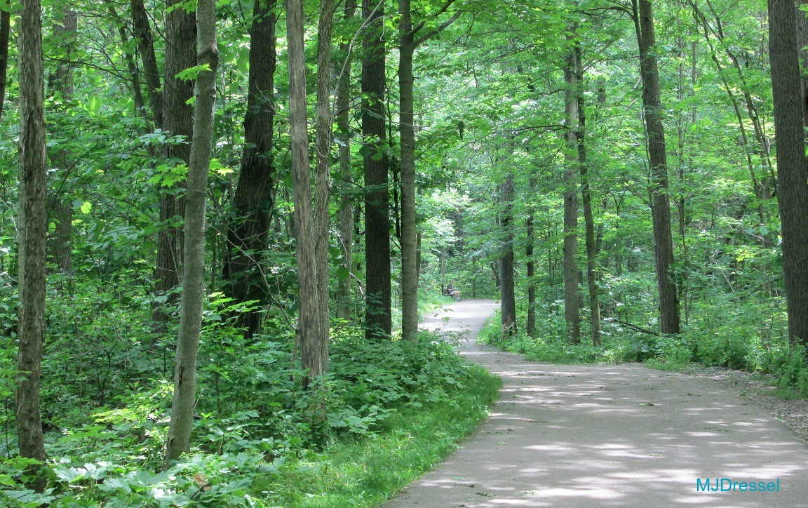 #WordlessWednesday walk in the park image green trees wooded area, winding path, Mary J McCoy-Dressel, Blog Post