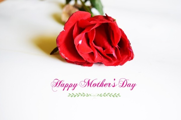 Mary J McCoy-Dressel, Mothers Day greeting, red rose white background,