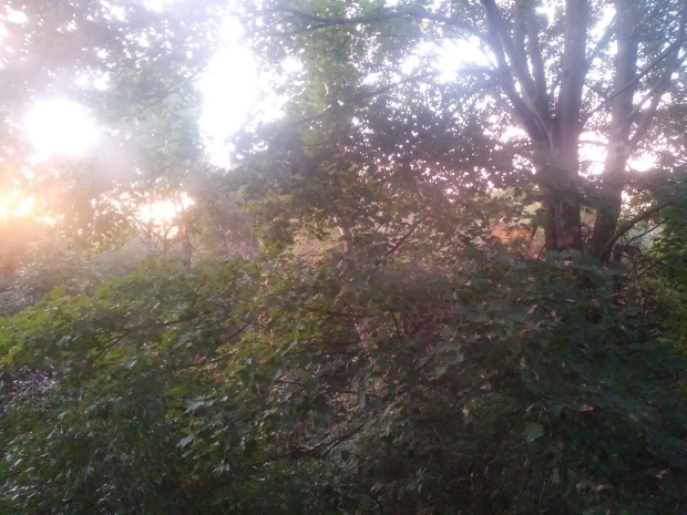 sunrise through woodland, trees, leaves, foggy,