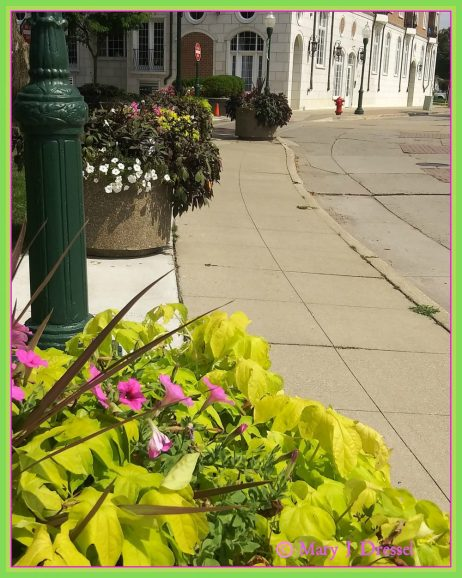 Big planters, sidewalk, Mary J. McCoy-Dressel Blog Post #WordlessWednesday