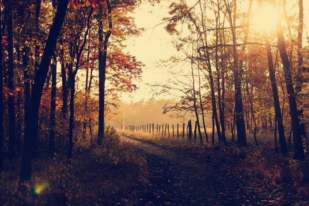 blog post city or country living, sunrise or sunset wooded scenery, trees, old fence line, path, Mary J McCoy-Dressel